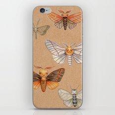Un-Natural Selection: Wooly Collared Mango Plumosa iPhone & iPod Skin