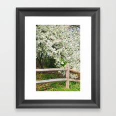 Crab Apple in bloom Framed Art Print