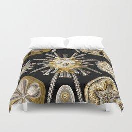 Ernst Haeckel Echinidea Sea Urchin Duvet Cover
