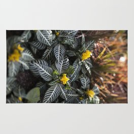 Zebra Plant  //  The Botanical Series Rug