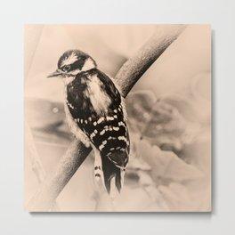 Downy Woodpecker Chick Metal Print