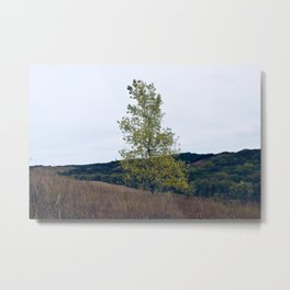 Quaking Aspen Metal Print
