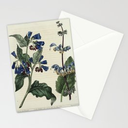 Flower Eastern Comfrey Indian Sage symphytum orientale salvia indica62 Stationery Cards