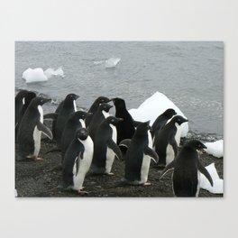 Adelie Penguins 3, Antarctica 2006 Canvas Print