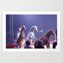 Circus Horses Art Print