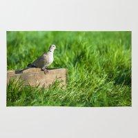 pigeon Area & Throw Rugs featuring pigeon by Marcel Derweduwen