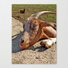 Mr. Goat Canvas Print