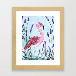 Chilean Flamingo Framed Art Print
