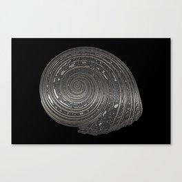 Metal Nautilida #1 Canvas Print