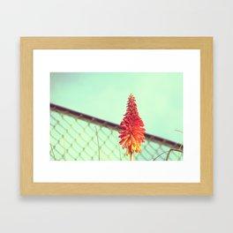 Solitude and Sunshine Framed Art Print