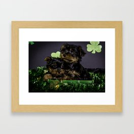 Two Hugging Yorkshire Terrier Puppies in a St. Patrick's Day Basket Framed Art Print