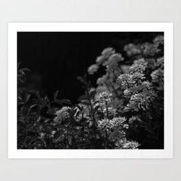 Edelweiss by Moonlight Art Print