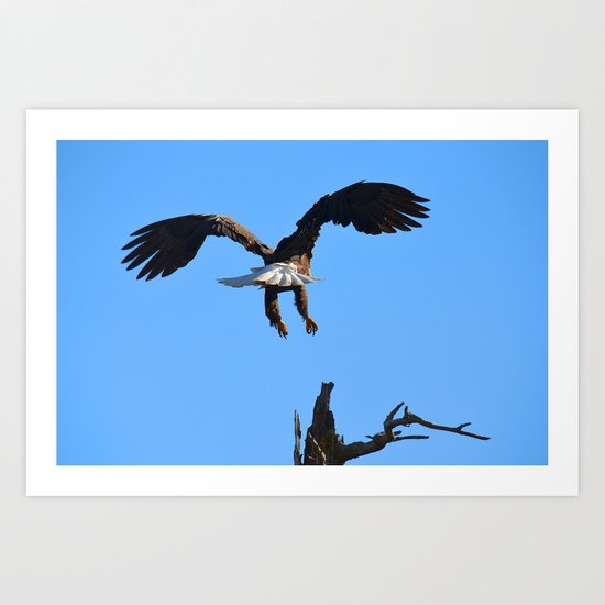 Coming in for a Landing Art Print