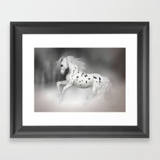 HORSE - Appaloosa Framed Art Print