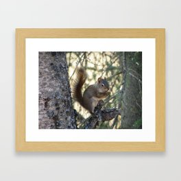 Soldotna Red Squirrel Framed Art Print