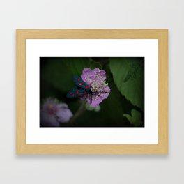New forest burnet on purple flower Framed Art Print