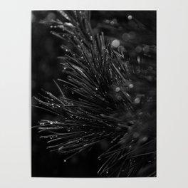 Pine Branch Poster