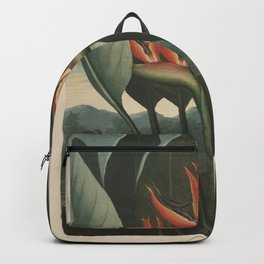 Henderson, Peter C. (d.1829) - The Temple of Flora 1807 - The Queen (Bird of Paradise Flower) Backpack