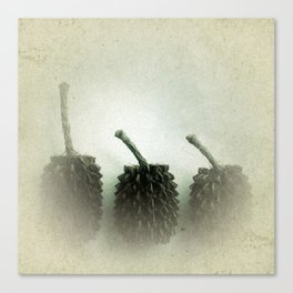 Little Brown Cones Canvas Print