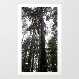 (#36) Tall Wet Evergreens Art Print
