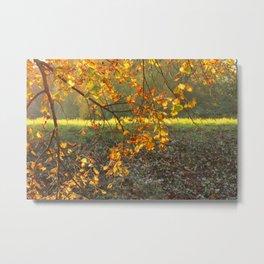 beautiful autumn ! Metal Print