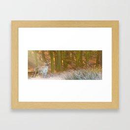 Deer in Richmond Framed Art Print