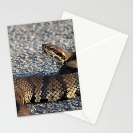 Cottonmouth Stare Stationery Cards