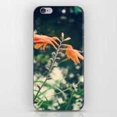 udabarriko lorie iPhone & iPod Skin