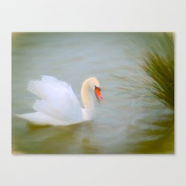 Soft swan lake Canvas Print