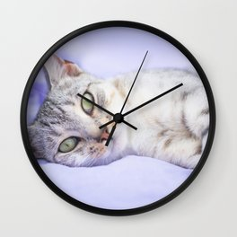 Silver tabby cat on purple blanket Wall Clock