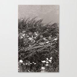 river bank, june 2018 Canvas Print
