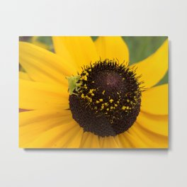 Ambush Bug Metal Print