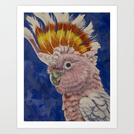Major Mitchell's Cockatoo Art Print