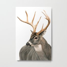 White-Tailed Buck Metal Print
