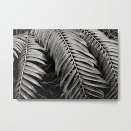 palm leaves Metal Print
