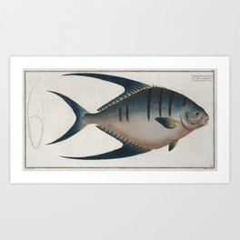 Vintage Illustration of a Palometa Fish (1785) Art Print
