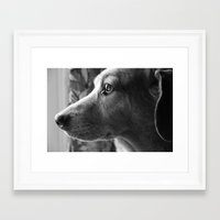 moby Framed Art Prints featuring Moby by tessmyers