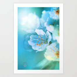 A sun kiss on a sakura Art Print