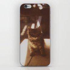 Kitten of the Souk iPhone & iPod Skin