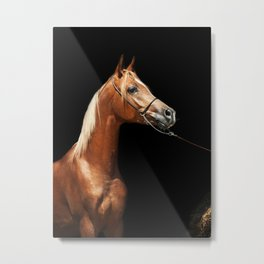 horse collection. arabian red Metal Print