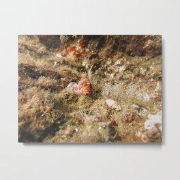 Scorpionfish Metal Print