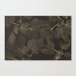 Botanical I _ Night Canvas Print