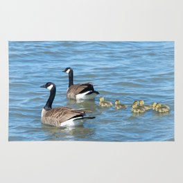 Family of Canadian Geese swimming Rug