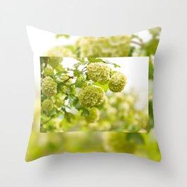 Viburnum opulus Roseum flowers Throw Pillow