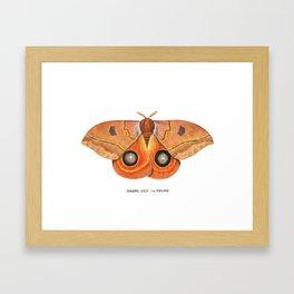 Randa's Eyed Silkmoth (Automeris randa) Framed Art Print