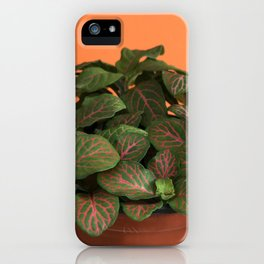 Fittonia iPhone Case