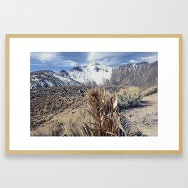 Rosa de las nieves Framed Art Print