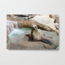 """Say, """"Seal."""" Metal Print"""