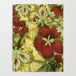nasturtium with golden leaves Poster