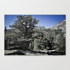 Search for Nature Canvas Print